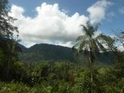 Ecuador Nebelwald